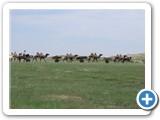 mongol-ahui-11