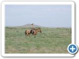 mongol-ahui-40