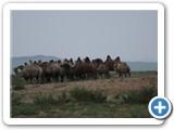 mongol-ahui-46