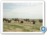 mongolian-naadam-25