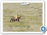 mongolian-naadam-6