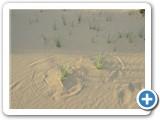 mongolian-nature-12