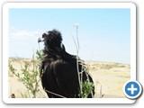 mongolian-nature-20