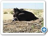 mongolian-nature-25