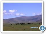 mongolian-nature-69