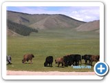 mongolian-nature-75