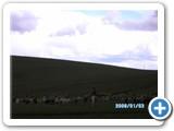 mongolian-nature-83