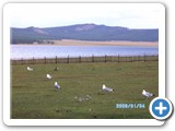 mongolian-nature-90